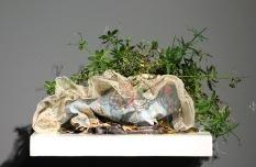 Medium: Latex-enamel paint, thread, lace, zipper, polyurethane, Washington soil, mini galium plant