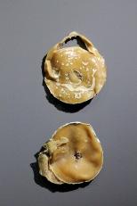 Plastisphere Earthlings